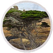 Cypress Tree In Point Lobos State Reserve Near Monterey-california  Round Beach Towel
