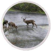 D-a0033 Mule Deer Round Beach Towel