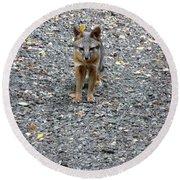 D-a0051-dc Gray Fox Pup Round Beach Towel