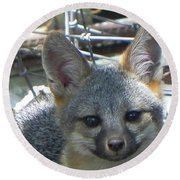 D-a0068 Gray Fox Pup Round Beach Towel