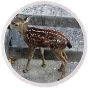 D-a0069 Mule Deer Fawn On Our Property On Sonoma Mountain Round Beach Towel