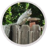 D-a0071-e-dc Gray Squirrel On Our Fence Round Beach Towel