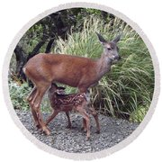 D2b6314 Fawn And Deer Mom Round Beach Towel