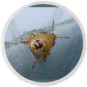 D2b6336-dc Colorful Insect On Sonoma Mountain Round Beach Towel