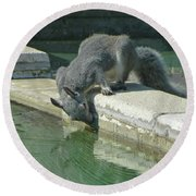 D2b6341-dc Gray Squirrel Drinking From The Pool Round Beach Towel