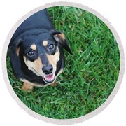 Dachshund Looking At Camera Smiling  Round Beach Towel