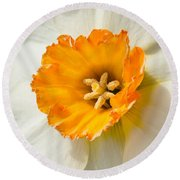 Daffodil Narcissus Flower Round Beach Towel