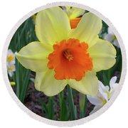 Daffodil 0796 Round Beach Towel