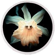 Daffodil #19 Round Beach Towel