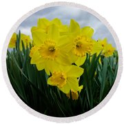Daffodil Delight Round Beach Towel