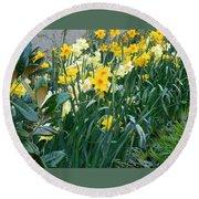 Daffodil Garden Round Beach Towel