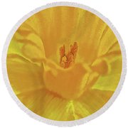 Daffodil In Spring Round Beach Towel