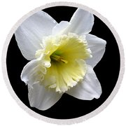 Daffodil On Black Round Beach Towel