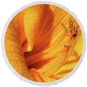 Daffodil - Peeping Tom 05 Round Beach Towel