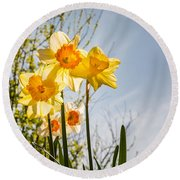 Daffodils Backlit Round Beach Towel