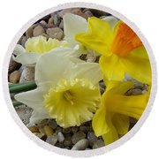 Daffodils Flower Artwork 29 Daffodil Flowers Agate Rock Garden Floral Art Prints Round Beach Towel
