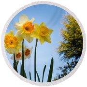Daffodils In The Sky Round Beach Towel