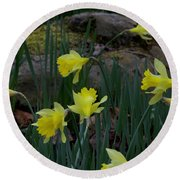 Daffodils In The Smokies Round Beach Towel