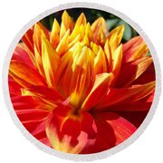 Dahlia Florals Orange Dahlia Flower Art Prints Canvas Round Beach Towel