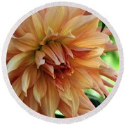 Dahlia In Bloom Round Beach Towel