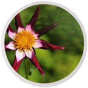 Dahlia Red White And Green Round Beach Towel