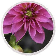Dahlia With Dew In Pink Round Beach Towel