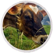 Dairy Cow Eating Grass Round Beach Towel