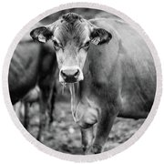 Dairy Cow On A Farm Stowe Vermont Black And White Round Beach Towel