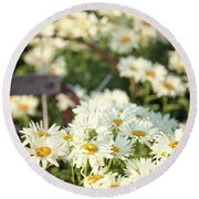 Daisies And A Hand Plow Round Beach Towel