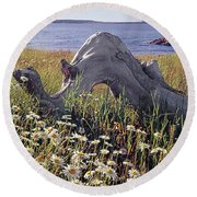 136236-daisies And Driftwood  Round Beach Towel