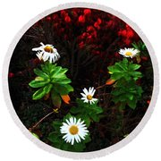 Daisies At The Boathouse Round Beach Towel
