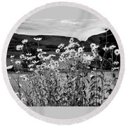 Daisies By The Roadside At Loch Linnhe B W Round Beach Towel