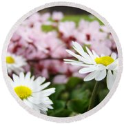 Daisies Flowers Art Prints Spring Flowers Artwork Garden Nature Art Round Beach Towel