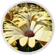 Daisies Flowers Landscape Art Prints Daisy Floral Baslee Troutman Round Beach Towel