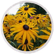 Daisies From Niagara Round Beach Towel