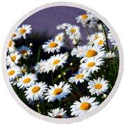 Daisies Round Beach Towel by Lana Trussell