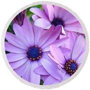 Daisies Lavender Purple Daisy Flowers Baslee Troutman Round Beach Towel
