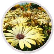 Daisies Yellow Daisy Flowers Garden Art Prints Baslee Troutman Round Beach Towel