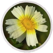 Daisy #5 Round Beach Towel