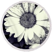 Daisy In Black And White  Round Beach Towel