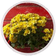 Daisy Plant In Drawers Round Beach Towel by Garry Gay