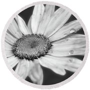 Daisy With Raindrops In Black And White Round Beach Towel