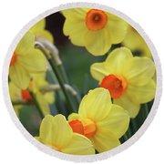 Dallas Daffodils 01 Round Beach Towel