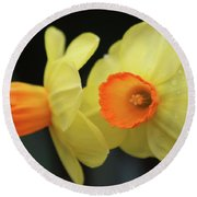 Dallas Daffodils 07 Round Beach Towel