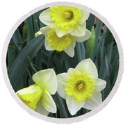 Dallas Daffodils 08 Round Beach Towel