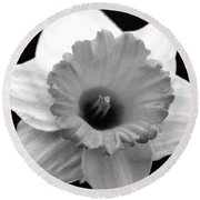 Dallas Daffodils 17 Round Beach Towel