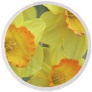 Dallas Daffodils 24 Round Beach Towel