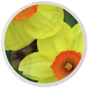 Dallas Daffodils 36 Round Beach Towel