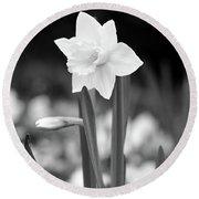 Dallas Daffodils 53 Round Beach Towel