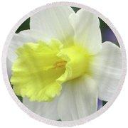 Dallas Daffodils 55 Round Beach Towel